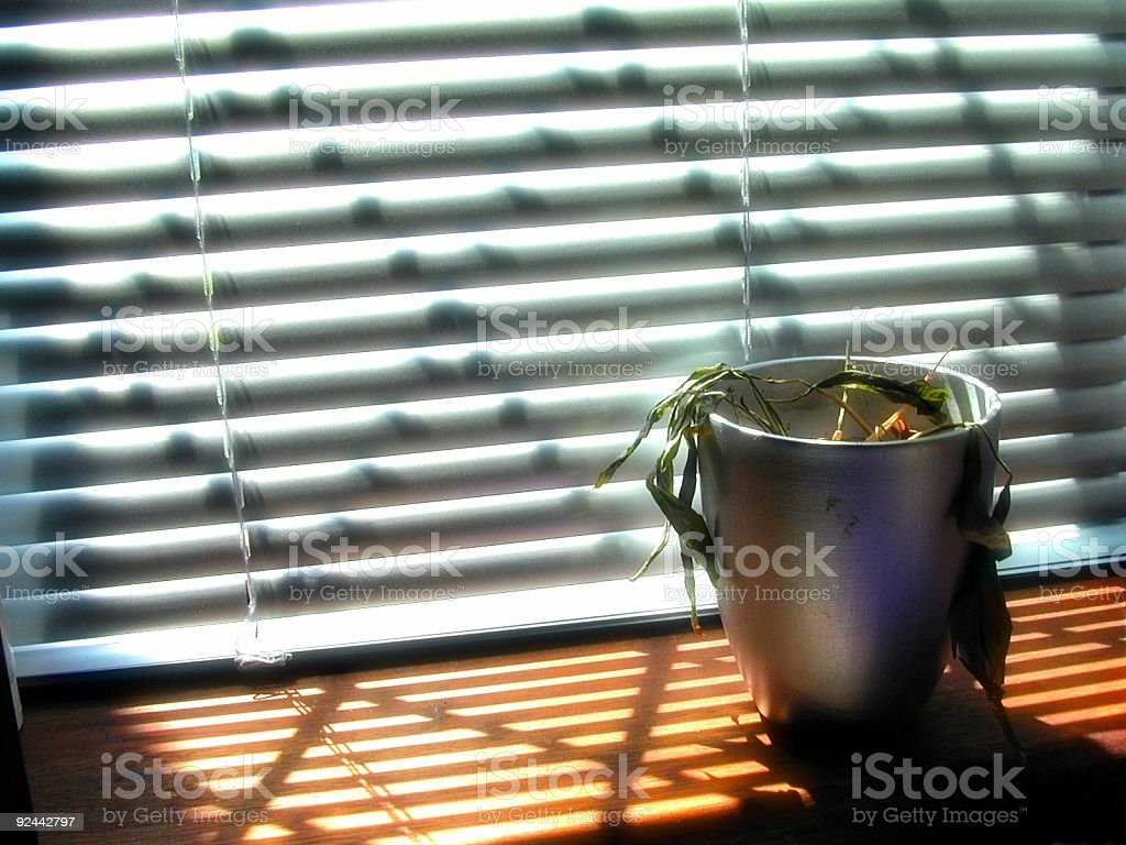 Dead plant royalty-free stock photo