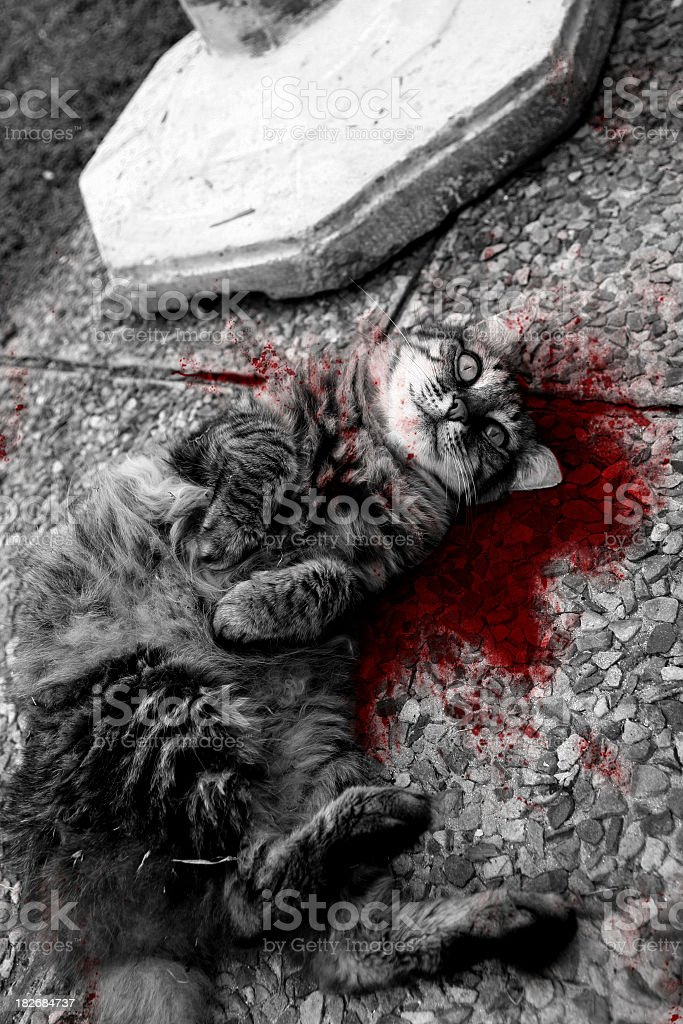 dead pussy cat [ virtual murder ] royalty-free stock photo