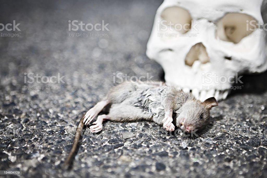 Dead rat mit menschlicher Schädel – Foto