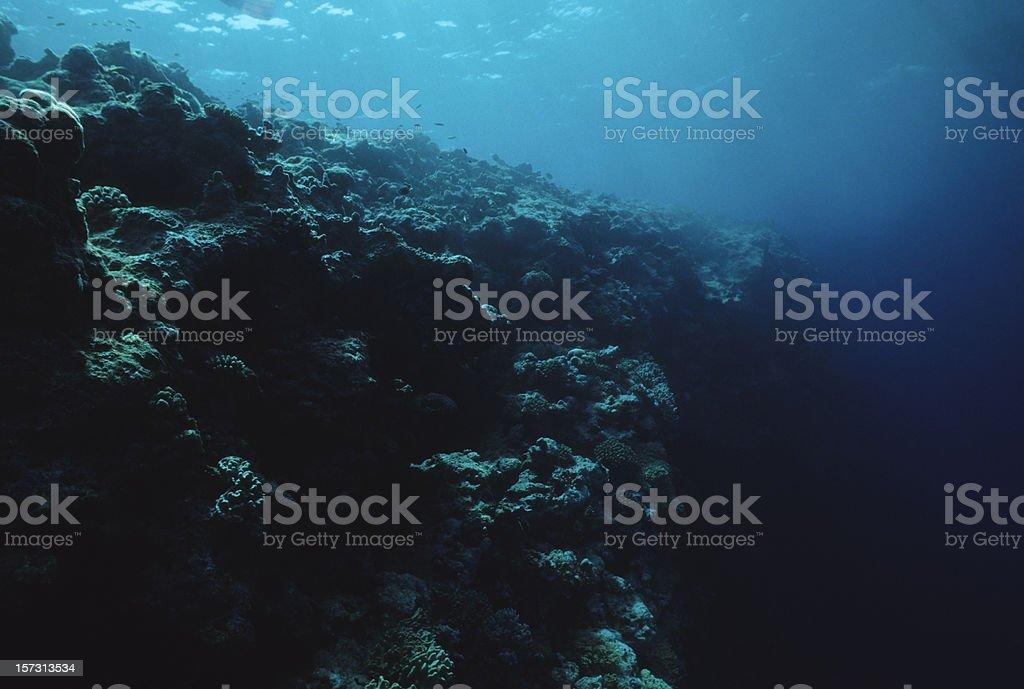 Dead Reef stock photo
