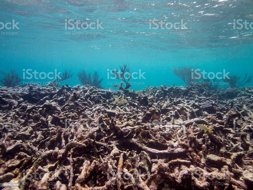 Dead Reef stock photo