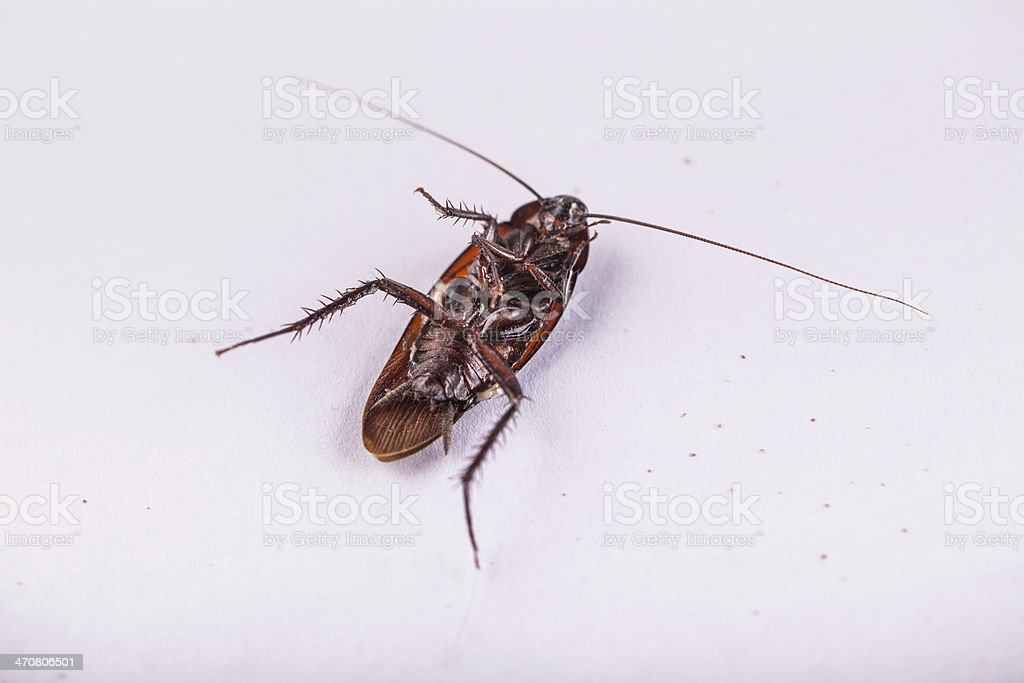 Dead roach royalty-free stock photo