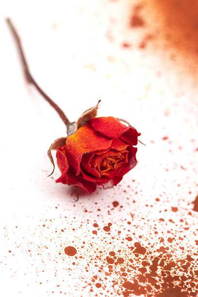 Dead rose and blood stock photo
