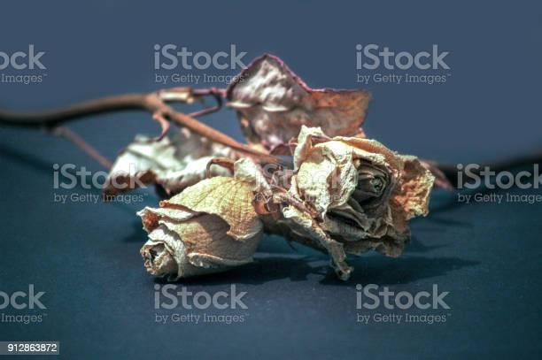 Dead rose picture id912863872?b=1&k=6&m=912863872&s=612x612&h=sq3o dhgzgknotx8nnujlysjzsfa0 c8w9ncizfukpu=