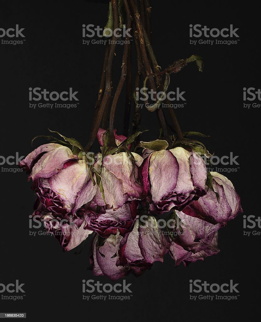 Royalty Free Upside Down Rose Pictures Images And Stock Photos Istock