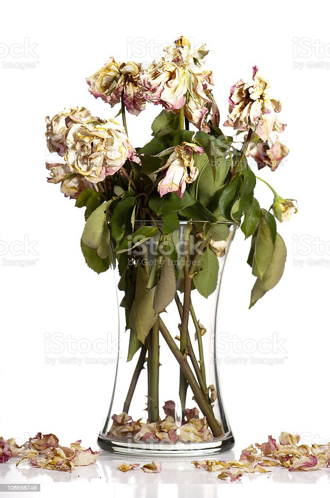 Dead Roses stock photo