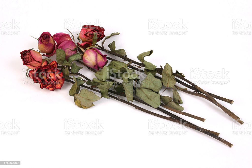 Dead Roses royalty-free stock photo