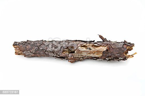 Dead rotten pine branch with holes and flaking bark. On a white background.