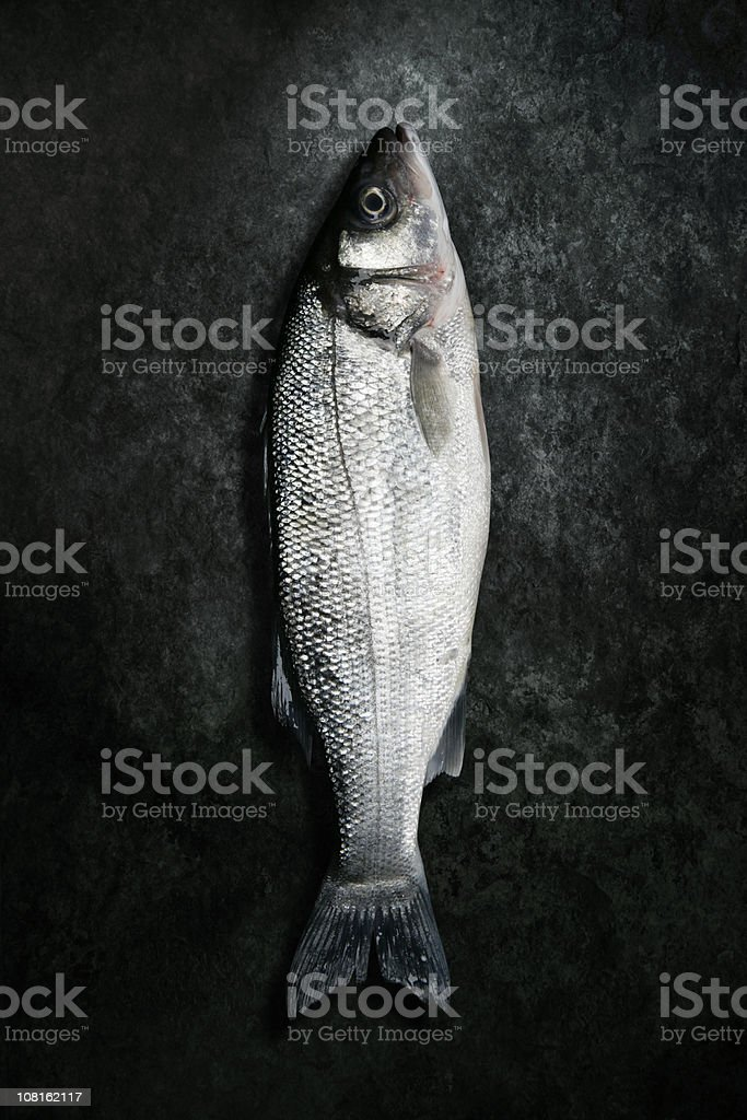 Dead Sea Bass Fish Lying on Grunge Background stock photo