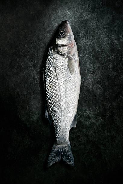 Dead Sea Bass Fisch liegen auf Grunge Hintergrund – Foto