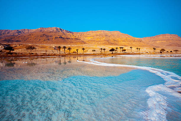 dead sea seashore with palm trees and mountains on background - israel stock-fotos und bilder