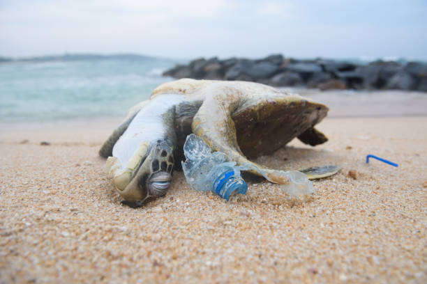 Dead sea turtle among ocean plastic waste stock photo