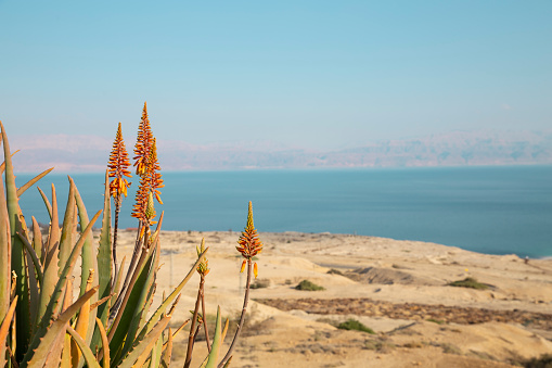 Dead sea view with  a plant.
