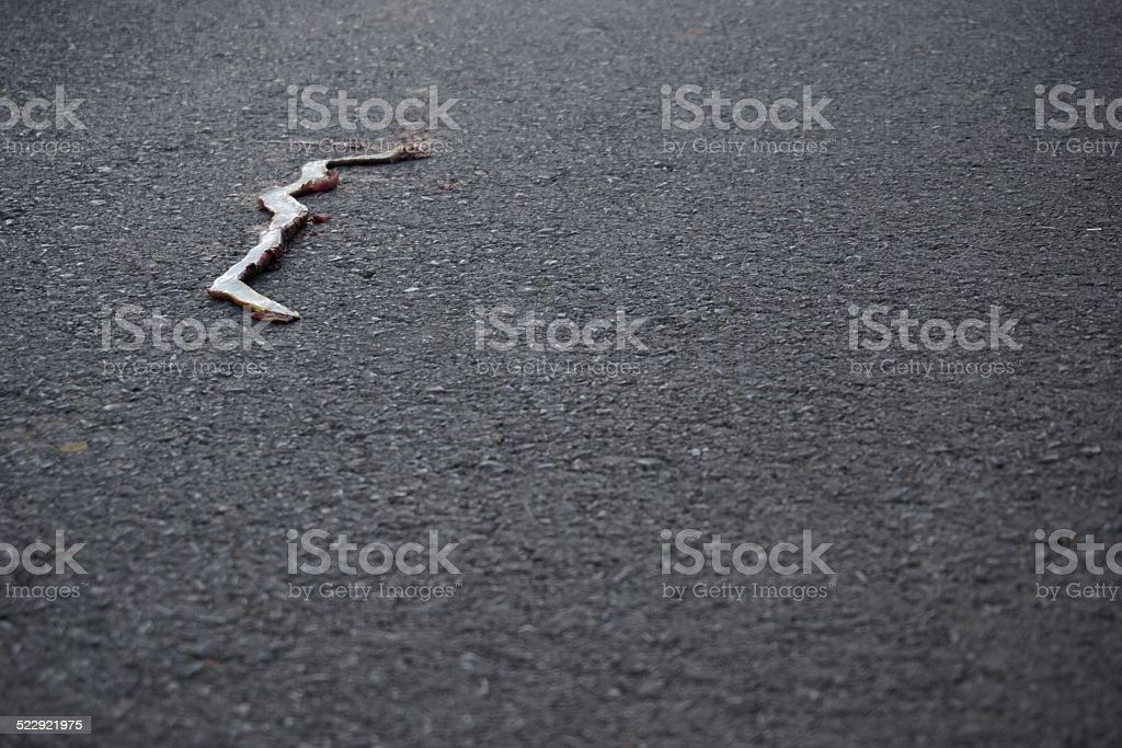dead serpente sulla strada auto - foto stock
