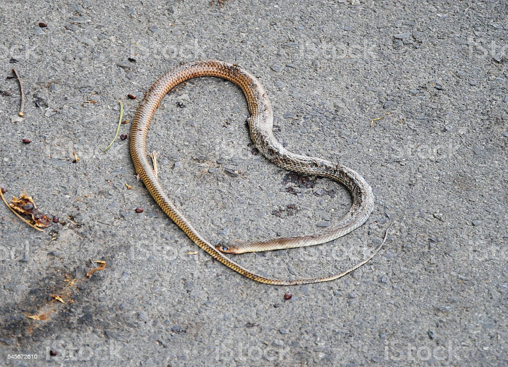 Dead snake on the road stock photo