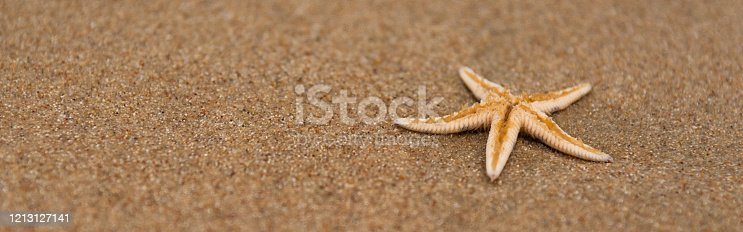 Dead starfish on the sand close up, ocean pollution problem concept, copy space.
