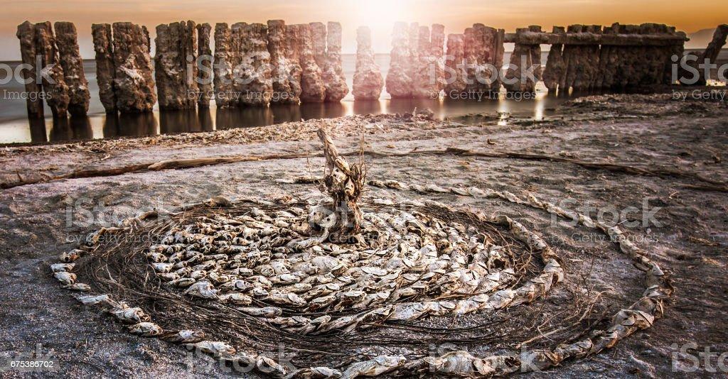 Dead Tilapia Fish on the Shore of the Salton Sea stock photo