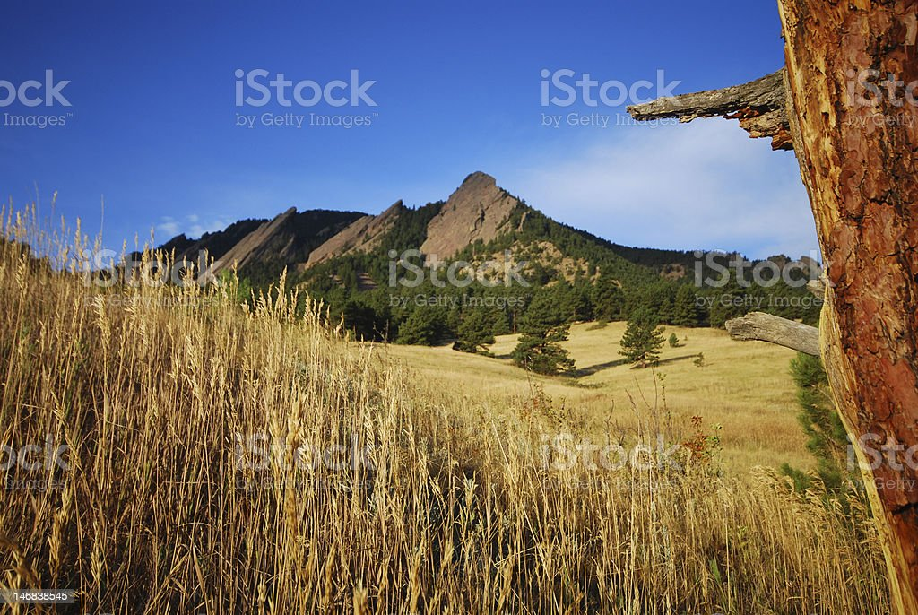 Dead tree and Boulder Flatirons royalty-free stock photo