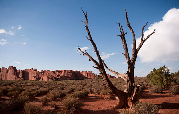 Dead Tree at Arches stock photo
