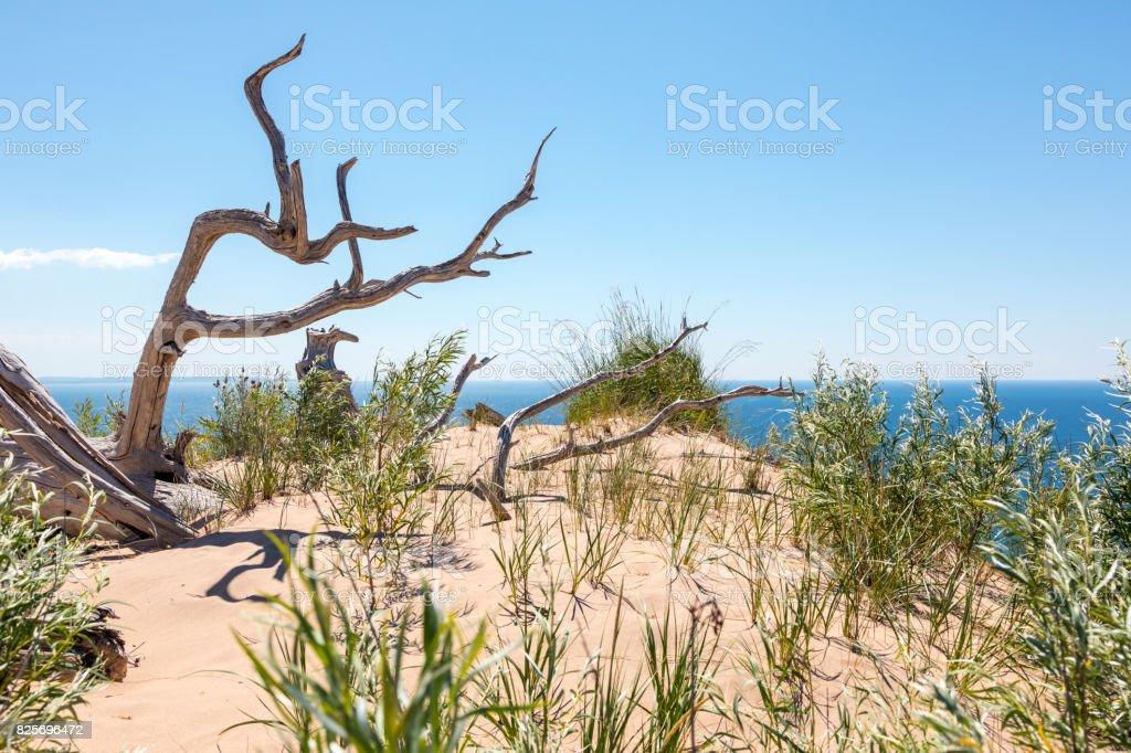 Dead Tree at Sleeping Bear Dunes National Lakeshore in Empire Michigan stock photo