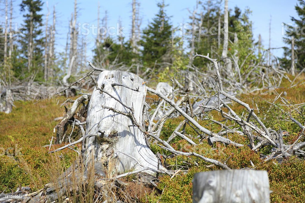 dead tree Black Forest royalty-free stock photo