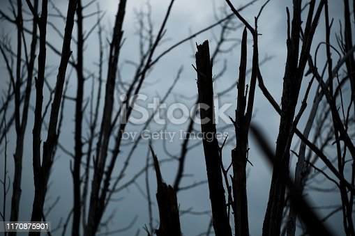 Dead tree branches. Dramatic view of leafless branches in a dark forest.
