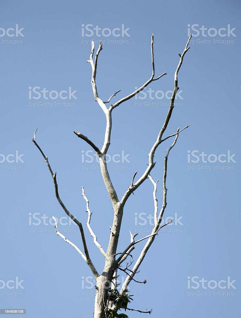 Dead tree branches stock photo