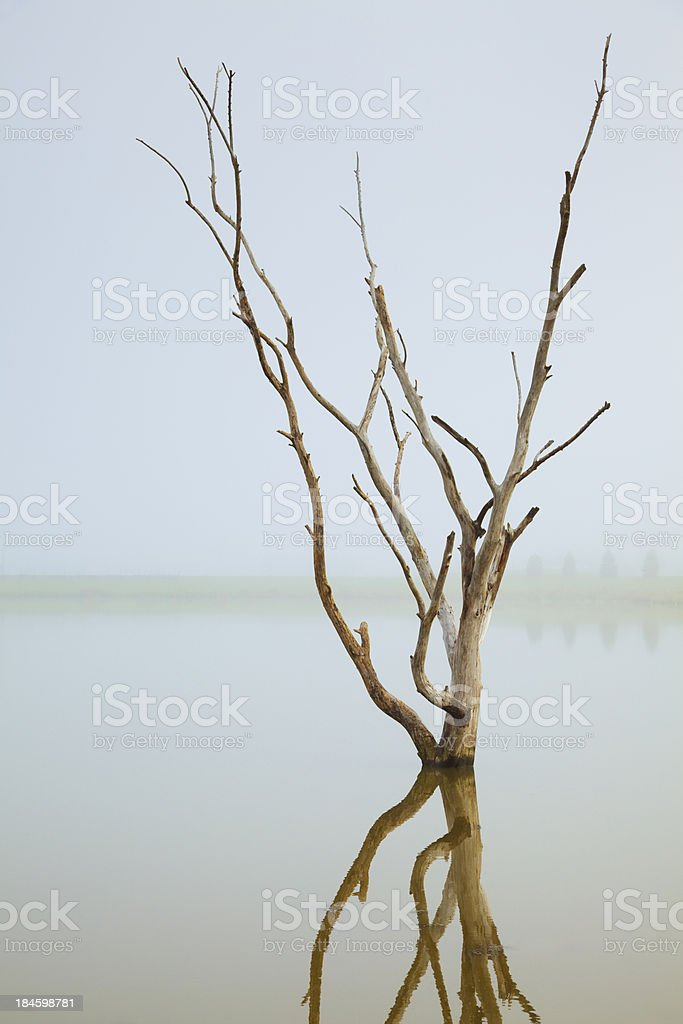 Dead Tree Fog, Reflected by Tranquil Waters royalty-free stock photo