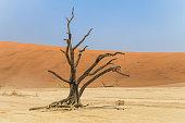 istock Dead tree in Deadvlei, Namibia 526152786