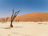 istock Dead tree in Deadvlei, Namibia 526152956