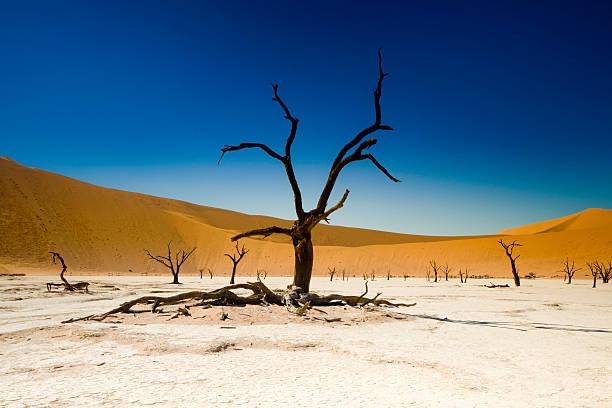 toter baum in der wüste und salt flat - namib wüste stock-fotos und bilder