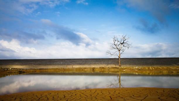 Dead tree in dry mud dam Dead tree in dry mud dam in east of Thailand lake bed stock pictures, royalty-free photos & images