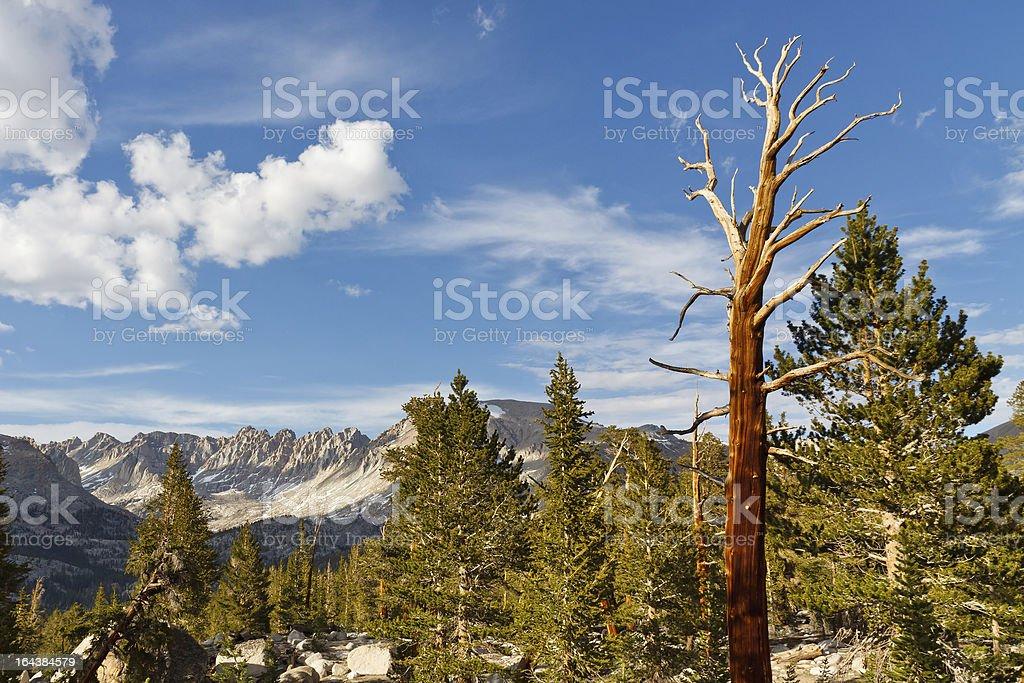 Dead Tree in High Sierra stock photo