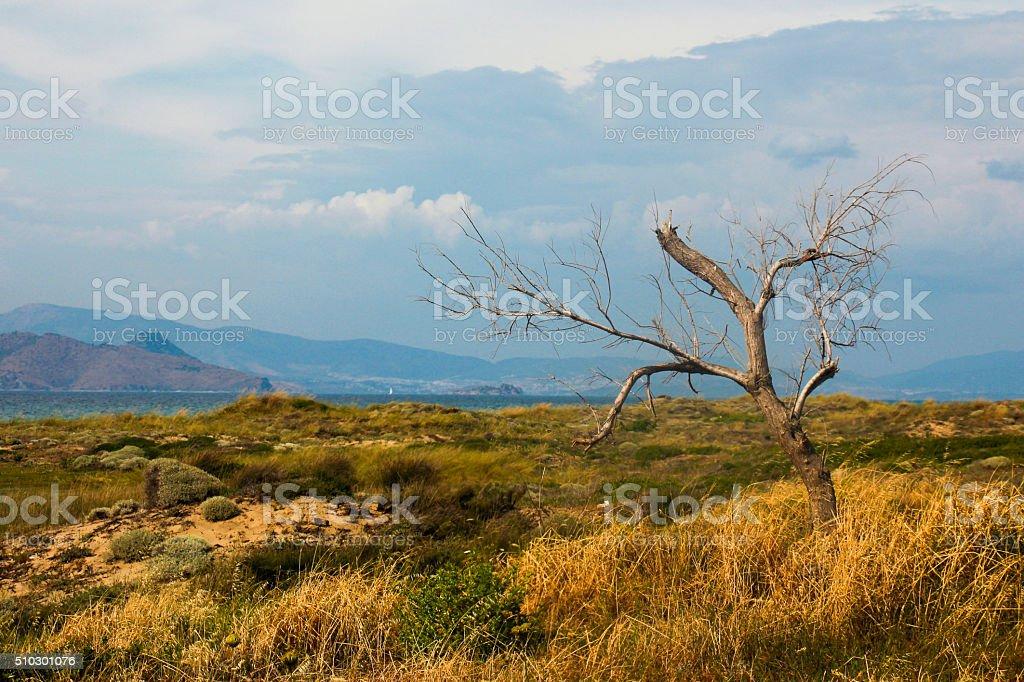 Dead tree in Kos stock photo