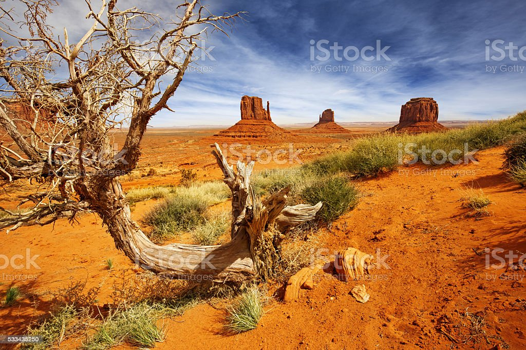 dead tree in monument valley landscape stock photo