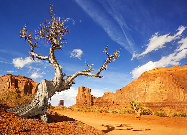 dead tree in monument valley - native american reservation stock photos and pictures