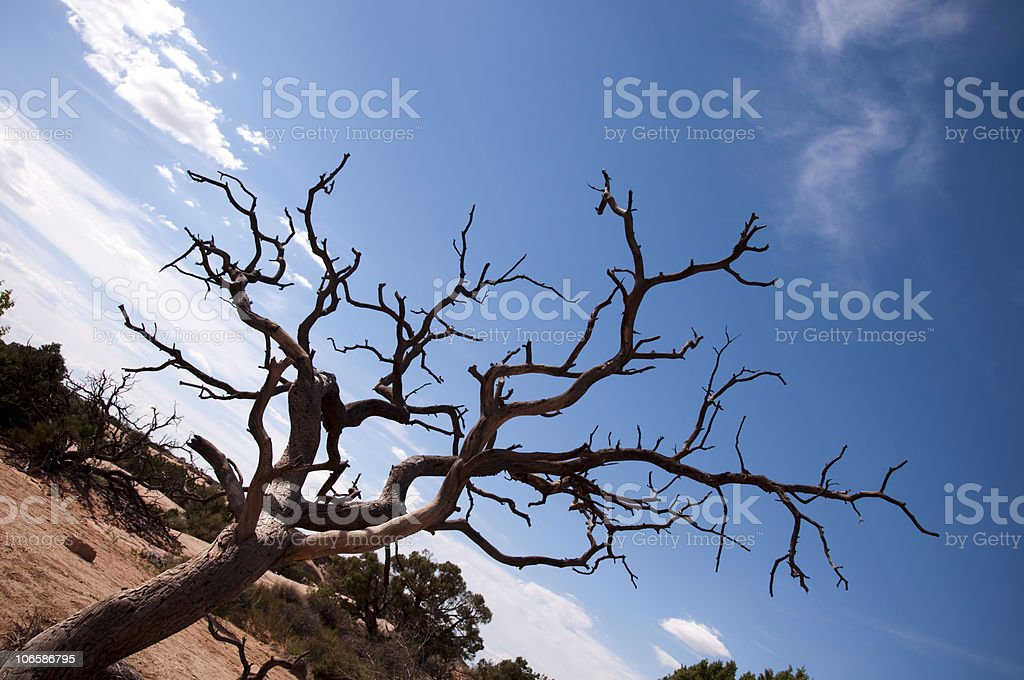 Dead Tree in the Desert stock photo