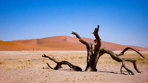 toter baum in der wüste namib, namibia - die toteninsel stock-fotos und bilder