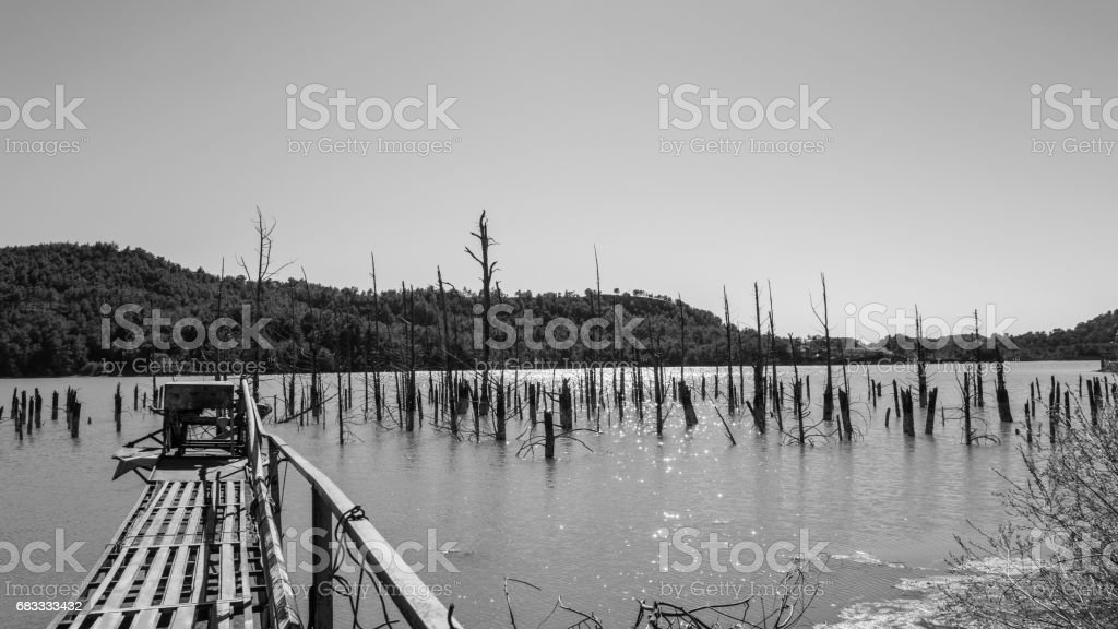 Dead tree in the water royalty-free stock photo