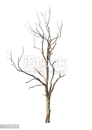 Dead tree in white background in Thailand