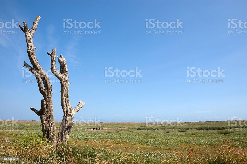 Dead Tree on a Salt Marsh stock photo