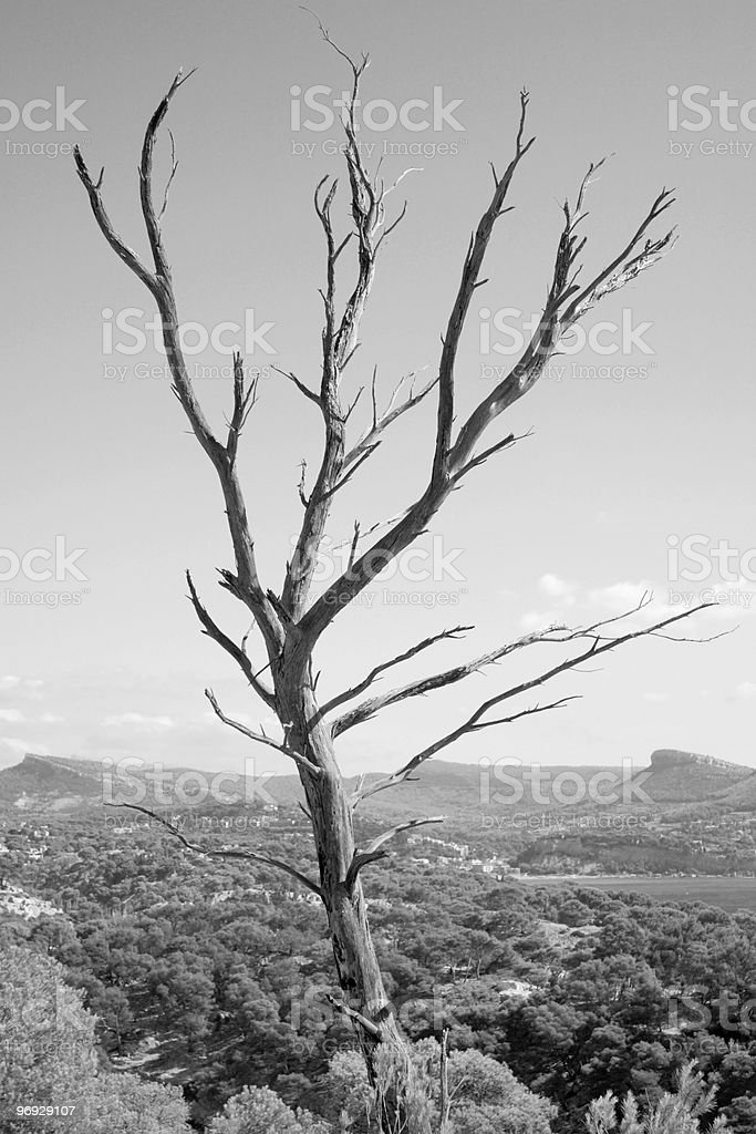 Dead Tree Over Landscape royalty-free stock photo