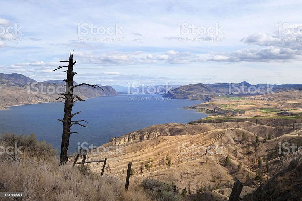 Dead tree overlooking arid landscape at Kamloops lake, Canada stock photo