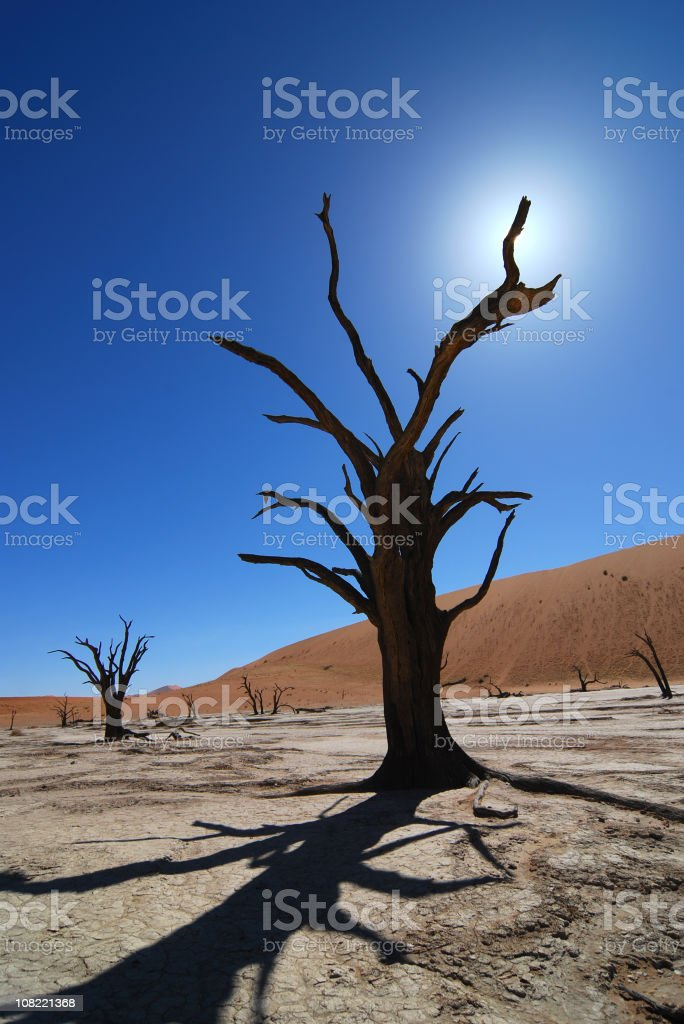 Dead tree royalty-free stock photo