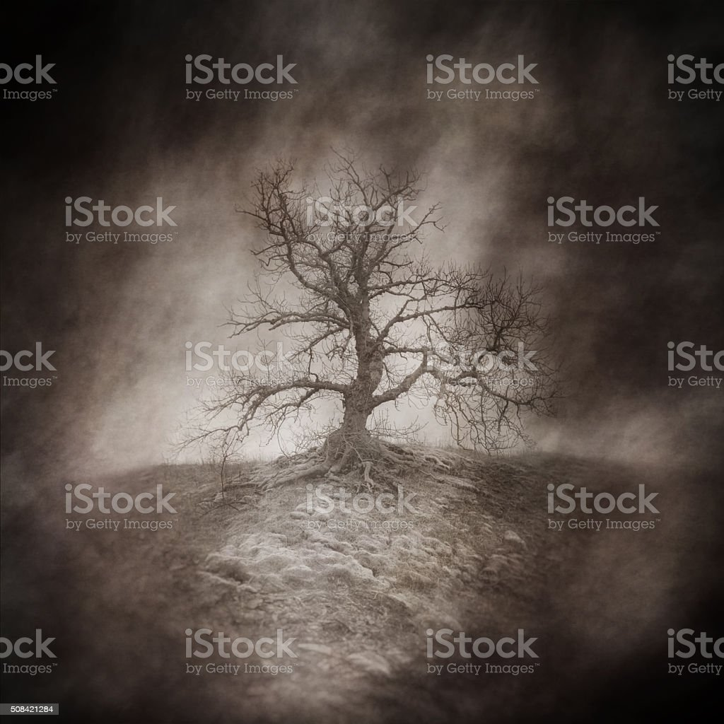 Arbre mort - Photo