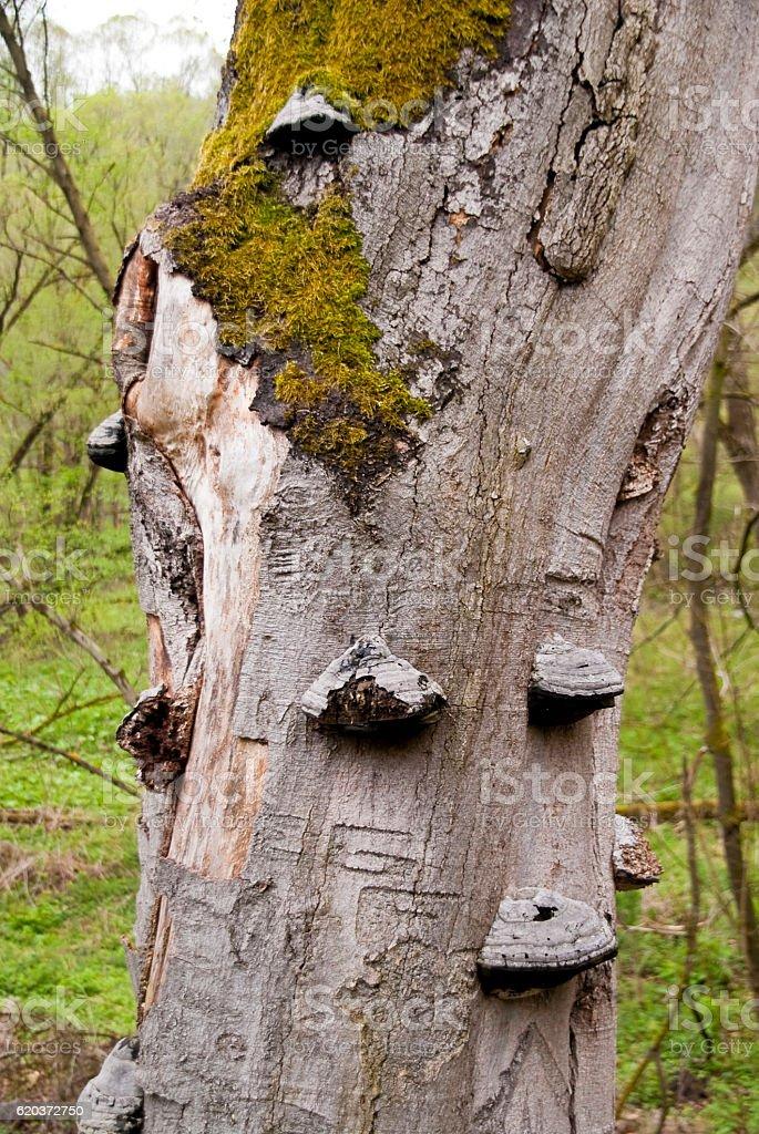 Árvore morta foto de stock royalty-free