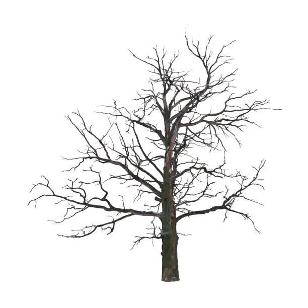 árvore morta - planta morta imagens e fotografias de stock