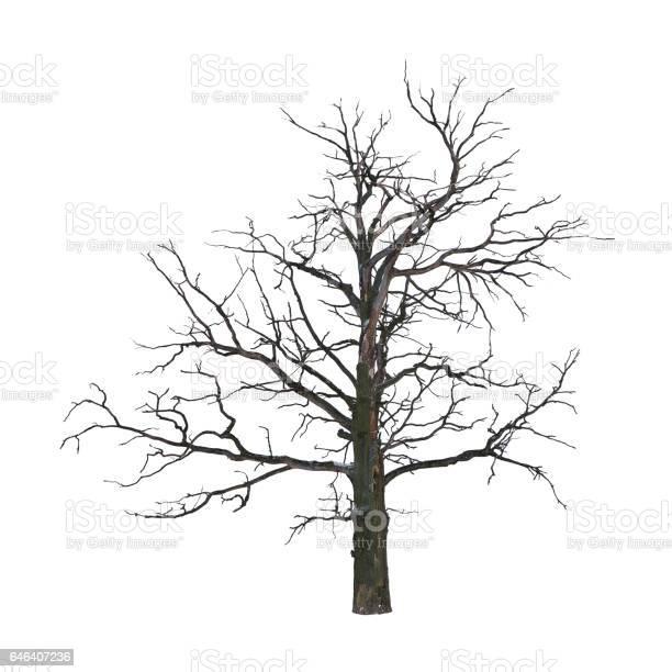 Photo of Dead tree
