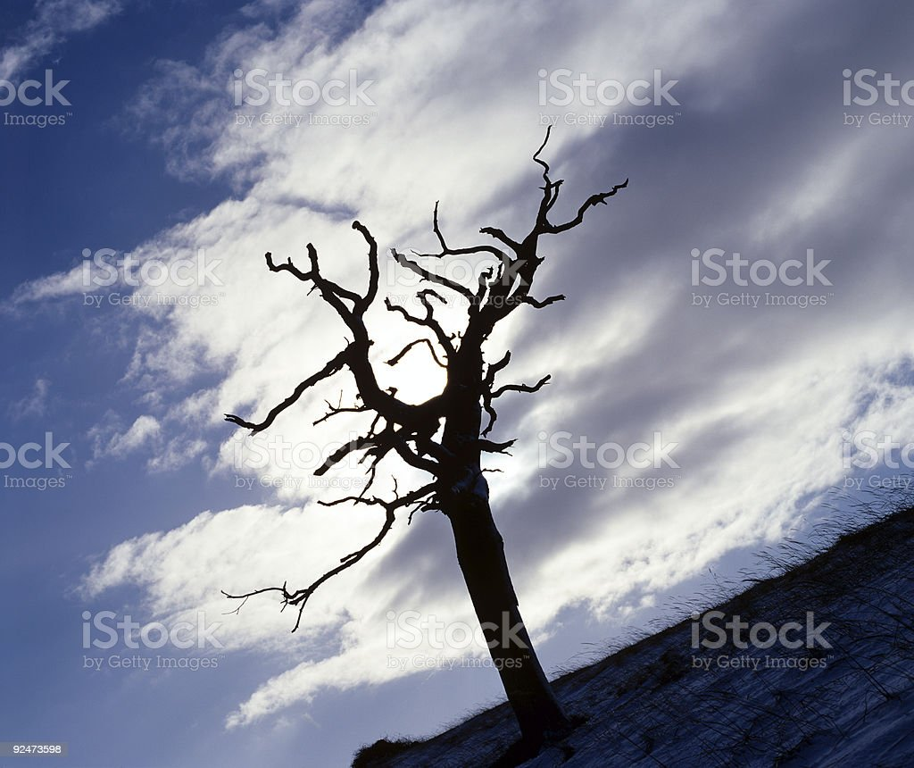 Dead Tree. royalty-free stock photo