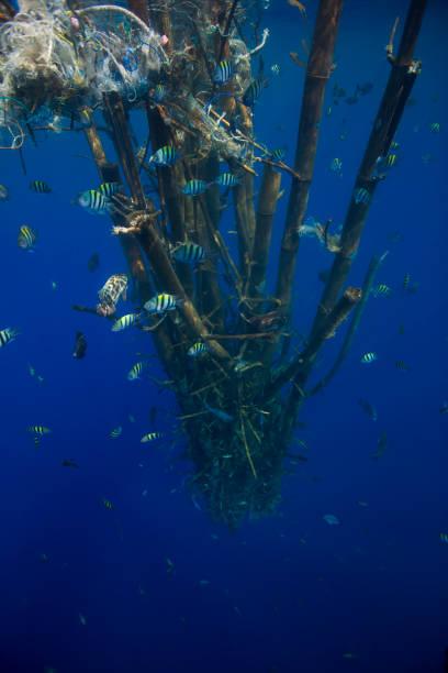Dead tree plastic stock photo